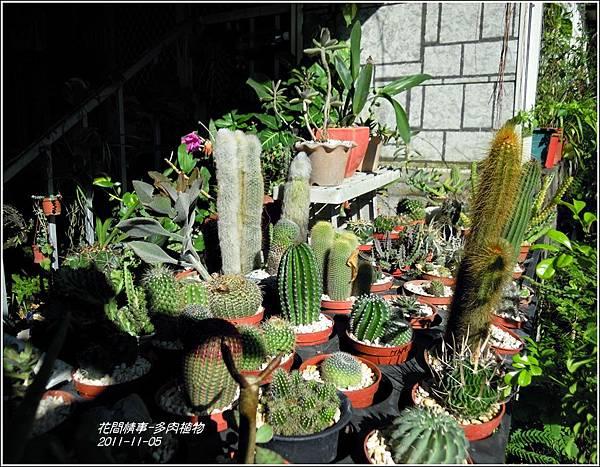2011-11-多肉植物17.jpg