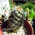 2011-11-多肉植物19.jpg