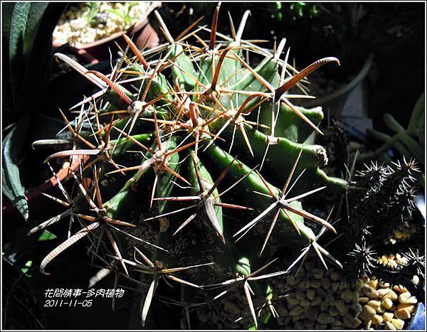 2011-11-多肉植物20.jpg