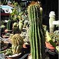 2011-11-多肉植物23.jpg