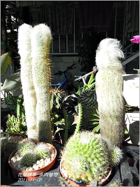 2011-11-多肉植物25.jpg