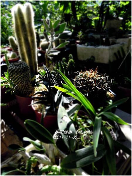 2011-11-多肉植物26.jpg
