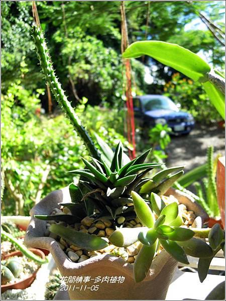 2011-11-多肉植物27.jpg