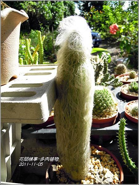 2011-11-多肉植物30.jpg
