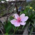 2011-11-社區巡禮22.jpg