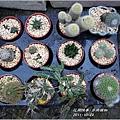 2011-11-多肉植物6.jpg