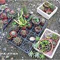 2011-11-多肉植物1.jpg