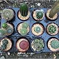 2011-11-多肉植物2.jpg