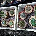 2011-11-多肉植物3.jpg