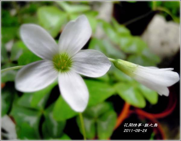 2011-11-銀之舞12.jpg