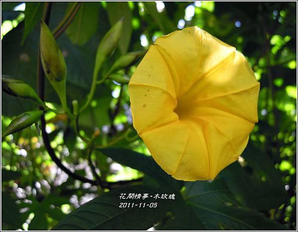 2011-11-木玫瑰3.jpg