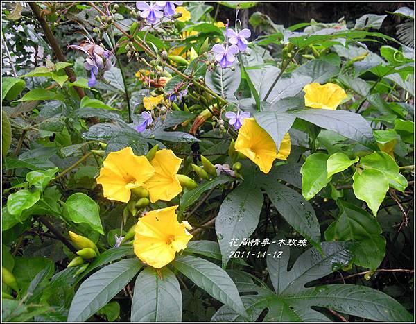 2011-11-木玫瑰8.jpg