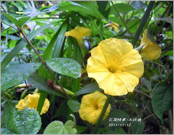 2011-11-木玫瑰10.jpg