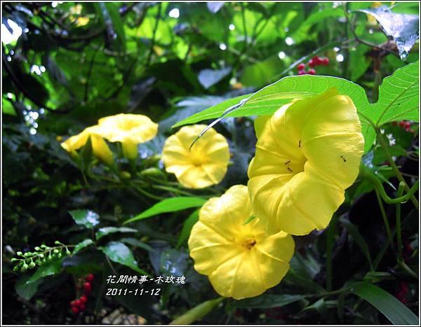 2011-11-木玫瑰13.jpg