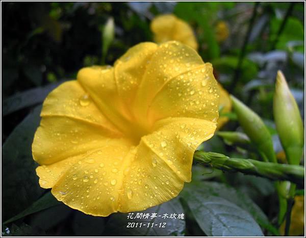 2011-11-木玫瑰14.jpg