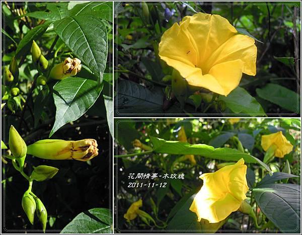 2011-11-木玫瑰23.jpg