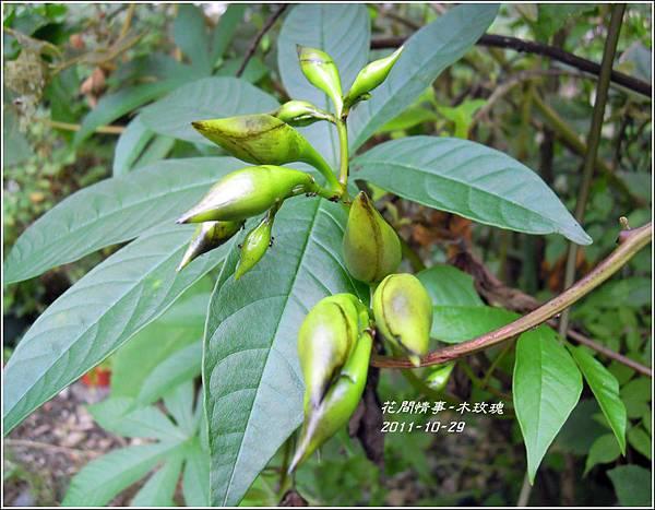 2011-11-木玫瑰1.jpg