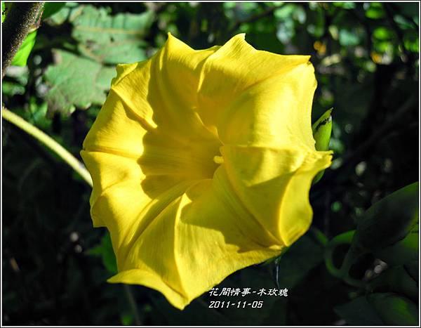 2011-11-木玫瑰2.jpg