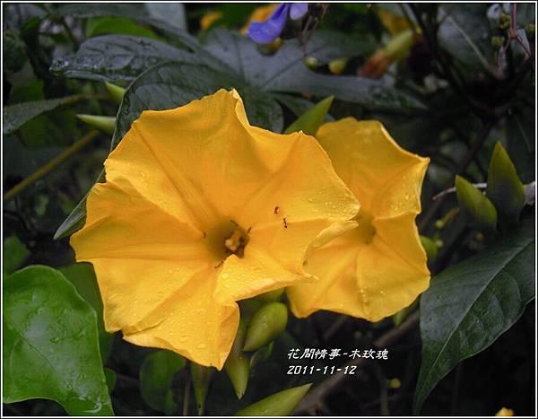 2011-11-木玫瑰9.jpg