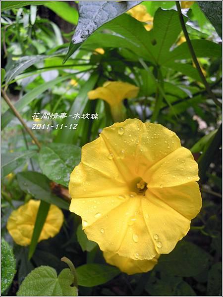 2011-11-木玫瑰16.jpg