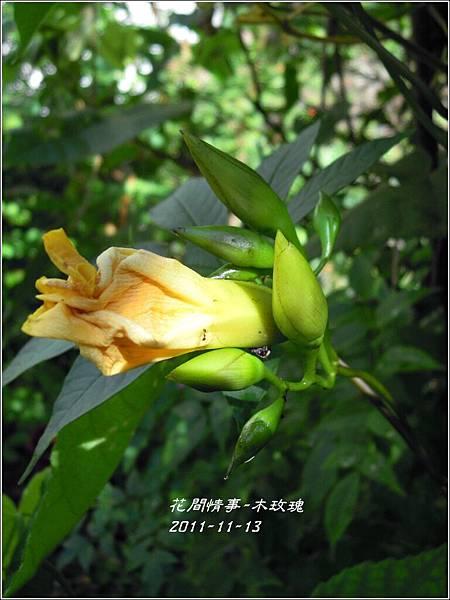 2011-11-木玫瑰17.jpg