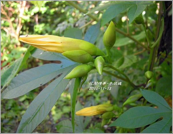 2011-11-木玫瑰18.jpg