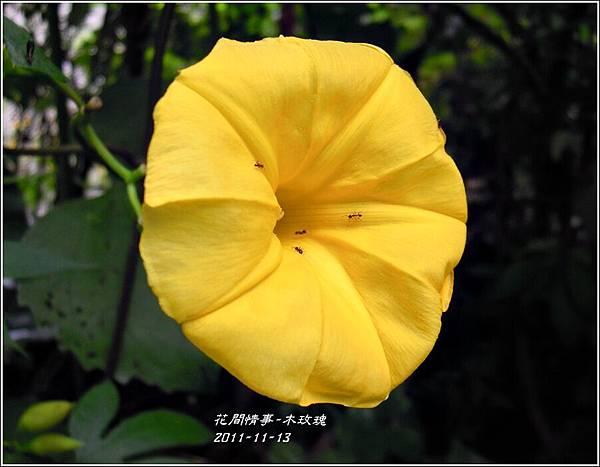 2011-11-木玫瑰19.jpg