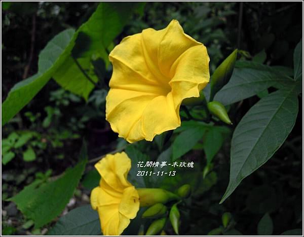 2011-11-木玫瑰21.jpg