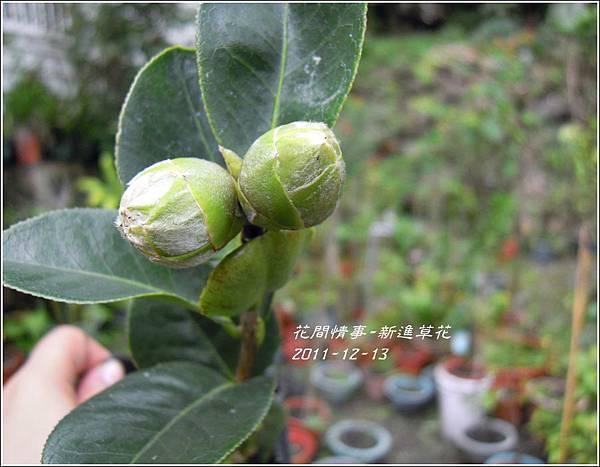2011-12-新進草花2.jpg