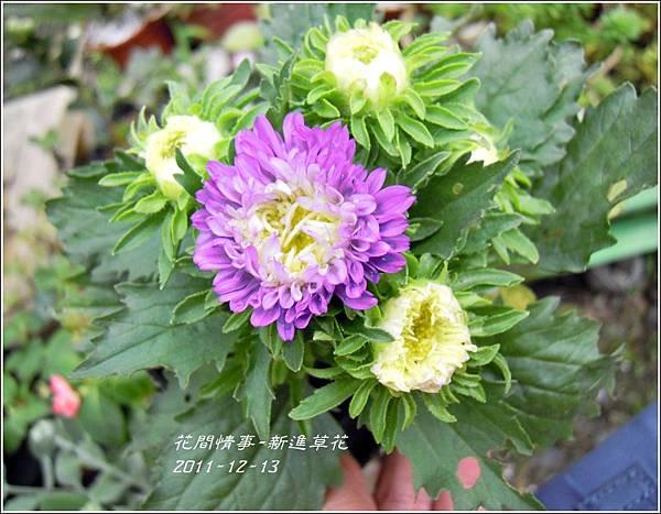 2011-12-新進草花4.jpg