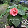2011-12-新進草花5.jpg