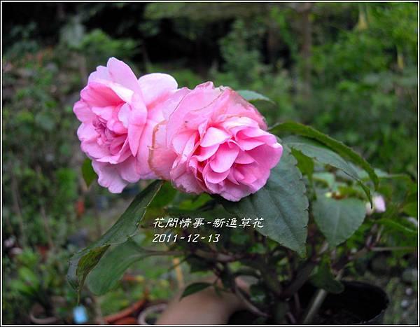 2011-12-新進草花6.jpg