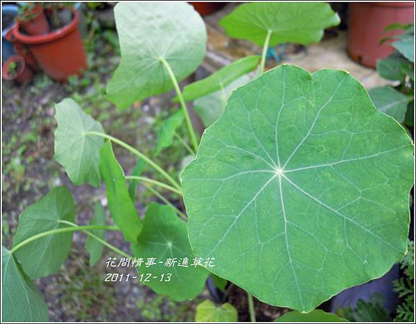 2011-12-新進草花8.jpg