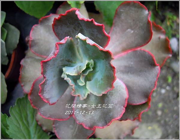 2011-12-新進草花9.jpg