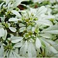 2011-12-聖誕初雪5.jpg
