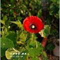 2012-04-虞美人04