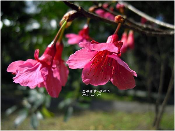 2012-02-林田山24