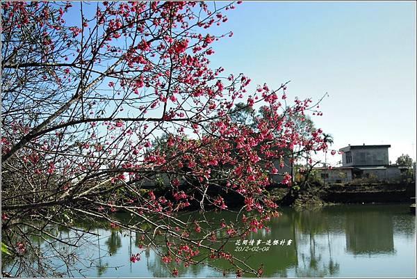 2012-02-追櫻計畫6