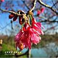 2012-02-追櫻計畫7