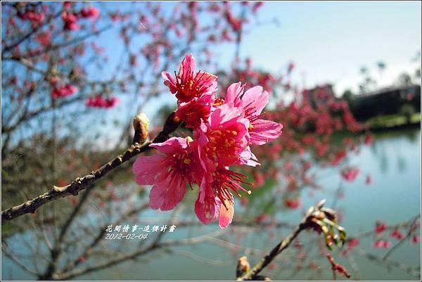2012-02-追櫻計畫9