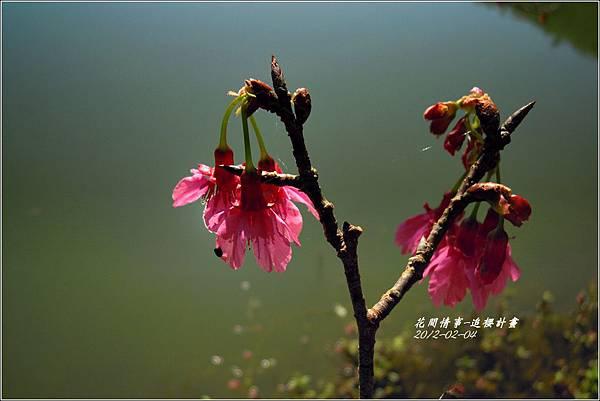 2012-02-追櫻計畫11