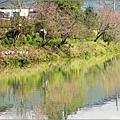 2012-02-追櫻計畫13