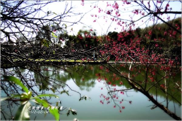 2012-02-追櫻計畫16