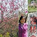 2012-02-追櫻計畫29