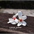 2012-03-桐妍歡喜4