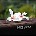 2012-03-桐妍歡喜5