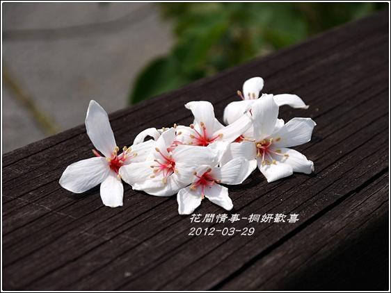 2012-03-桐妍歡喜7