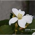 2012-03-桐妍歡喜10