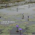 2012-03-馬太鞍濕地1
