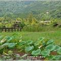 2012-03-馬太鞍濕地5